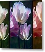Coloured Tulips Metal Print