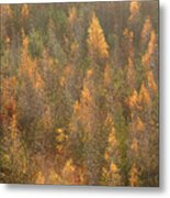 Colourful Autumn Leaves. Metal Print