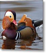 Colourful Duck Metal Print