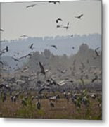 Colourful Flying Chaos Metal Print