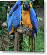 Colourful Macaw Pohakumoa Maui Hawaii Metal Print