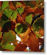 Colours Of Fall II Metal Print