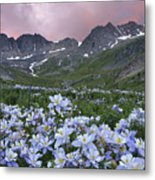 Columbine At America Basin Metal Print