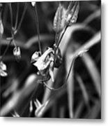 Columbine Flower 2 Black And White Metal Print