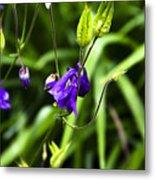 Columbine Flower 2 Metal Print