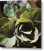Columbine Foliage Metal Print