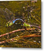 Come Along With Me Dragonflies Metal Print
