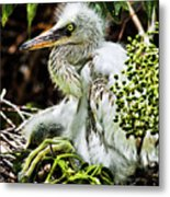 Come On Feathers Metal Print