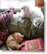 Comfy Bella And Cat Metal Print