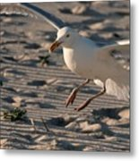 Coming In For A Landing - Jersey Shore Metal Print