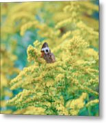 Common Buckeye Butterfly Hides In The Goldenrod Metal Print