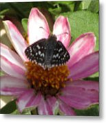 Common Checker Butterfly Metal Print