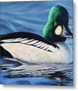 Common Goldeneye Metal Print
