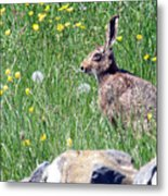 Common Hare Metal Print