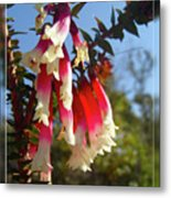 Common Heath Metal Print