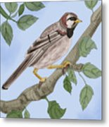 Common House Sparrow Metal Print