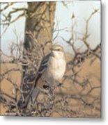 Common Mockingbird Metal Print