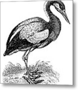 Common Stork Metal Print