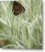 Common Wood Nymph  Metal Print