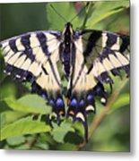 Common Yellow Swallowtail Metal Print