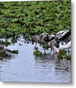 Community Pond Metal Print