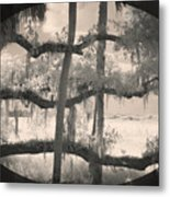 Competing Branches Metal Print