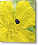 Complementary Colors Metal Print