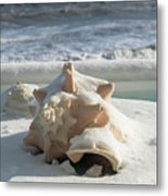 Conch Shell In Snow Metal Print