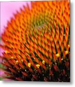 Cone Flower Closeup Metal Print