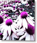 Cone Flower Delight Metal Print