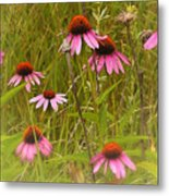Cone Flowers In The Meadow Metal Print