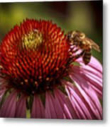 Coneflower Bee Metal Print