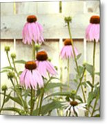Coneflower Patch Metal Print