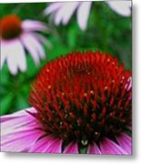Coneflowers Metal Print by Juergen Roth
