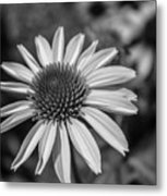 Conehead Daisy In Black And White Metal Print