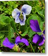Confederate And Purple-blue Violets Metal Print