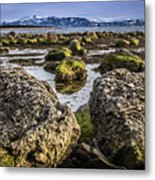 Conglomerate Boulders, Green Point, Nl Metal Print