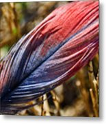 Congo African Grey Feather Metal Print