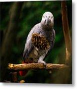 Congo African Grey Parrot Metal Print