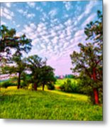 Conley Road Meadow, Oaks, Barn, Spring  Metal Print