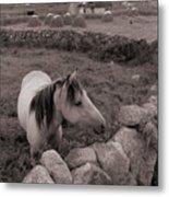 Connemura Horse-signed-#300 Metal Print