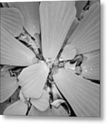 Conservatory Nature In Black And White 1 Metal Print