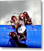 Consider The Ants 2 Of 3 Metal Print