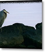 Contemplating Heron Metal Print