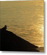 Contemplation II Metal Print