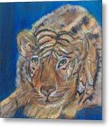 Contented Tiger Metal Print