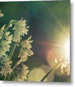Contra Jour Flowers 1 Metal Print