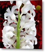 Contrasting Red And White Flowers Metal Print