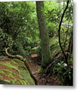 Cook Forest Metal Print