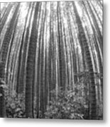 Cook Pines Metal Print